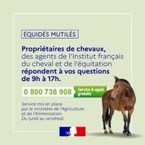 https://www.finistere.gouv.fr/var/ide_site/storage/images/actualites/mise-en-place-d-un-numero-gratuit-dedie-a-l-ecoute-des-detenteurs-de-chevaux/296394-1-fre-FR/Mise-en-place-d-un-numero-gratuit-dedie-a-l-ecoute-des-detenteurs-de-chevaux_large.jpg
